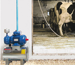 Bucket Milking Systems